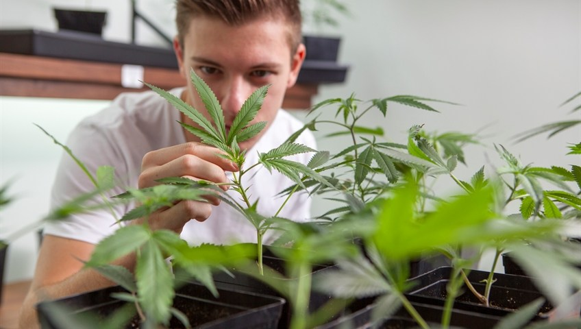 7 Tips for Growing Cannabis Indoors in Canada to Improve Your Next Crop
