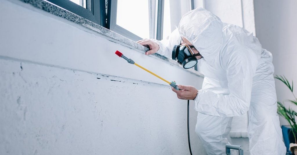 Why Is Regular Pest Control Required?