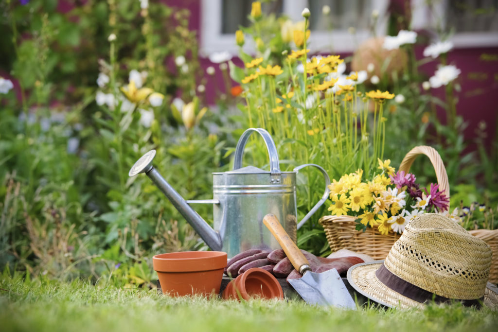 Three tools every gardener should add to their collection