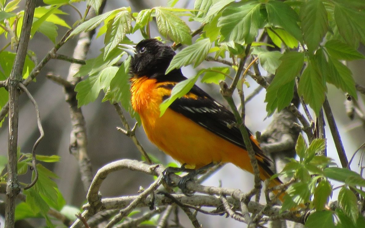 How To Transform Your Backyard Into A Birdwatchers Haven