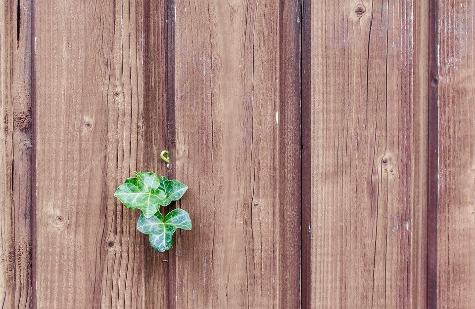 Wood, Ivy, Wood Fence, Paling, Boards, Nature