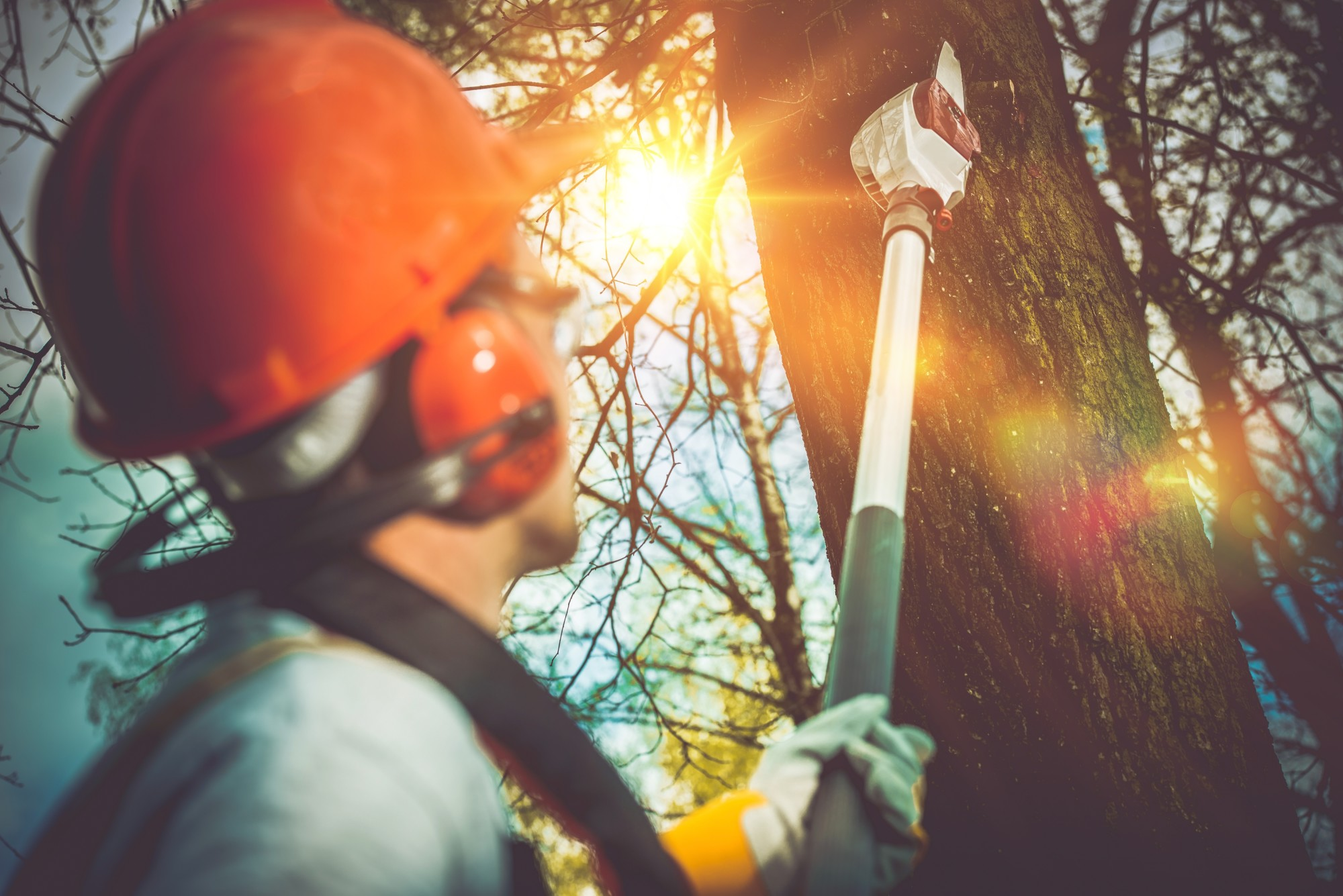 This Is How to Remove a Tree From Your Yard