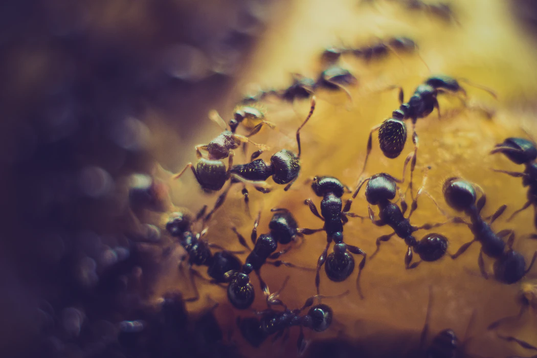 4 Common pest problems in your home and how to deal with them